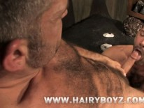 Bruno And Junior Fuck from Hairy Boyz