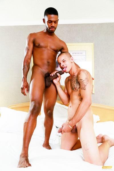 white male black female porn № 33792