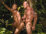 Lords Of The Jungle -