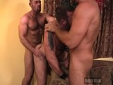 Threeway Muscle Bear F