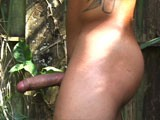 Huge Uncut Cuban Boxer