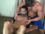 Titian Hog Tie