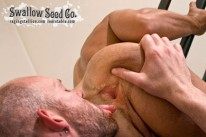 Swallow Seed Co from Naked Sword