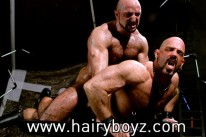 Shane And Xerxes from Hairy Boyz