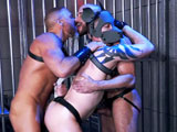 Leather dogs 2